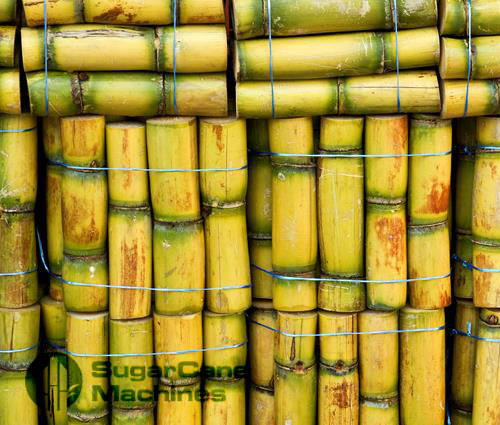 Sugarcane Staked & Stored